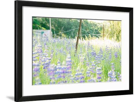 Roadside Lupine Wildflowers in Spring-Vincent James-Framed Art Print