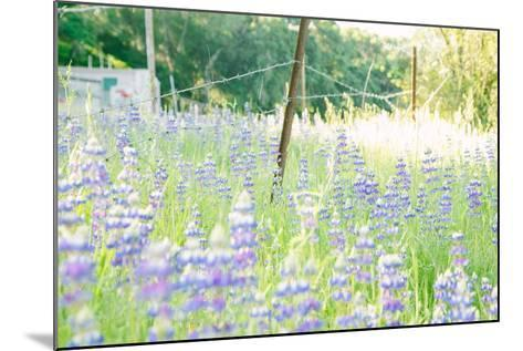Roadside Lupine Wildflowers in Spring-Vincent James-Mounted Photographic Print