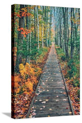 Wild Gardens Path, Acadia National Park, Maine-Vincent James-Stretched Canvas Print