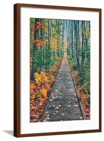 Wild Gardens Path, Acadia National Park, Maine-Vincent James-Framed Art Print