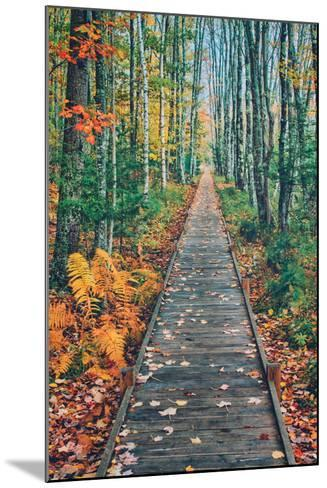 Wild Gardens Path, Acadia National Park, Maine-Vincent James-Mounted Photographic Print