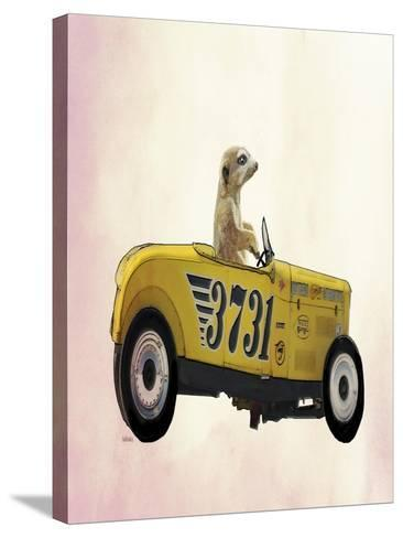 Meerkat in Hot Rod-Fab Funky-Stretched Canvas Print