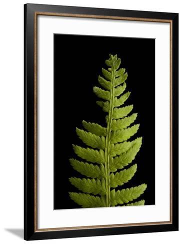 A Lady Fern, Athyrium Filix-Femina-Joel Sartore-Framed Art Print