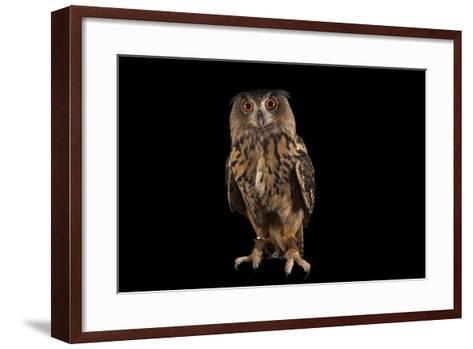 A Eurasian Eagle Owl, Bubo Bubo, at Ocean Park-Joel Sartore-Framed Art Print