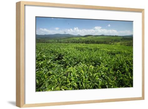 A Rolling Landscape of Fields in Western Ethiopia Near Jimma-Cagan Sekercioglu-Framed Art Print