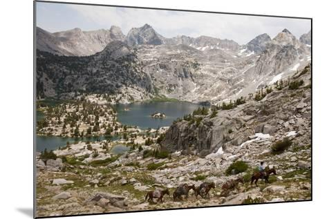 A Cowboy Leads a String of Pack Animals-Joel Sartore-Mounted Photographic Print