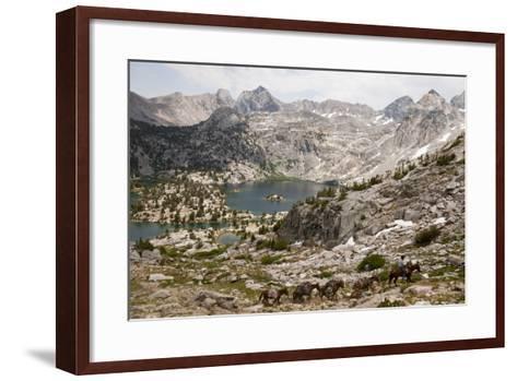 A Cowboy Leads a String of Pack Animals-Joel Sartore-Framed Art Print