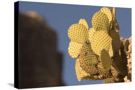 A Prickly Pear Cactus Grows in Santa Elena Canyon in Big Bend National Park, Texas-Phil Schermeister-Stretched Canvas Print