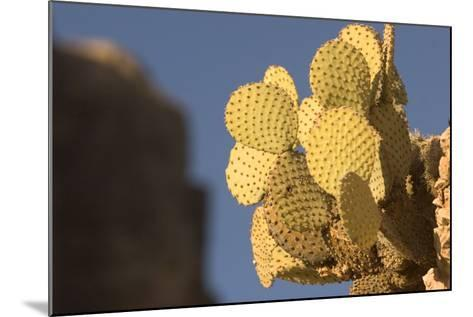 A Prickly Pear Cactus Grows in Santa Elena Canyon in Big Bend National Park, Texas-Phil Schermeister-Mounted Photographic Print