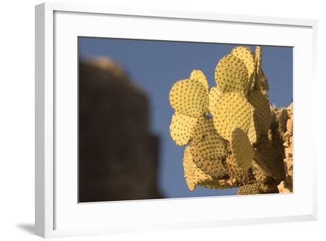 A Prickly Pear Cactus Grows in Santa Elena Canyon in Big Bend National Park, Texas-Phil Schermeister-Framed Art Print