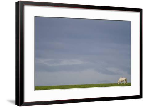 An Icelandic Horse in a Field-Erika Skogg-Framed Art Print