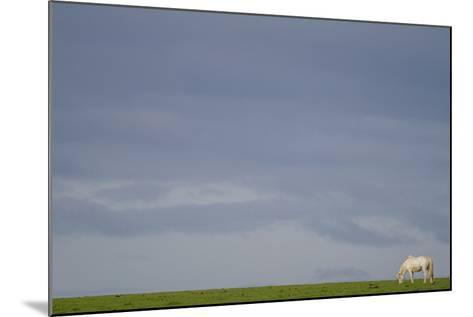 An Icelandic Horse in a Field-Erika Skogg-Mounted Photographic Print
