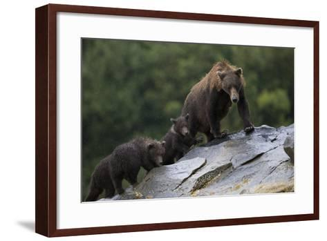 Adult Brown Bear, Ursus Arctos, with Juvenile Cubs-Roy Toft-Framed Art Print