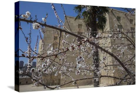 Almond Blossoms Bloom Outside of the Palace of the Shirvanshahs-Will Van Overbeek-Stretched Canvas Print