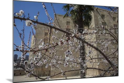 Almond Blossoms Bloom Outside of the Palace of the Shirvanshahs-Will Van Overbeek-Mounted Photographic Print