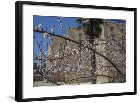 Almond Blossoms Bloom Outside of the Palace of the Shirvanshahs-Will Van Overbeek-Framed Art Print