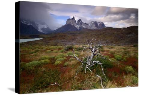 A Patagonia Scenic with the Andes Mountains, Scrub Vegetation, a Dead Tree, and Dramatic Clouds--Stretched Canvas Print