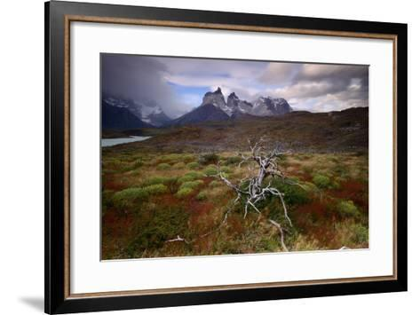 A Patagonia Scenic with the Andes Mountains, Scrub Vegetation, a Dead Tree, and Dramatic Clouds--Framed Art Print