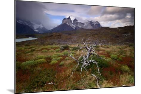 A Patagonia Scenic with the Andes Mountains, Scrub Vegetation, a Dead Tree, and Dramatic Clouds--Mounted Photographic Print
