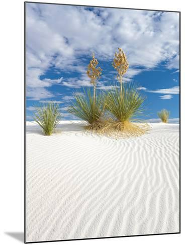 Soapweed Yucca Blooming in White Sands National Monument-Derek Von Briesen-Mounted Photographic Print