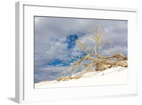 Cottonwood Tree on White Dune in White Sands National Monument-Derek Von Briesen-Framed Art Print