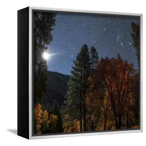 A Moonlit Autumn Night with Constellation Orion Above Colorful Aspen Trees-Babak Tafreshi-Framed Canvas Print
