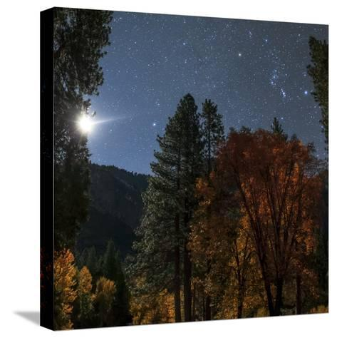 A Moonlit Autumn Night with Constellation Orion Above Colorful Aspen Trees-Babak Tafreshi-Stretched Canvas Print