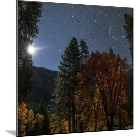A Moonlit Autumn Night with Constellation Orion Above Colorful Aspen Trees-Babak Tafreshi-Mounted Photographic Print