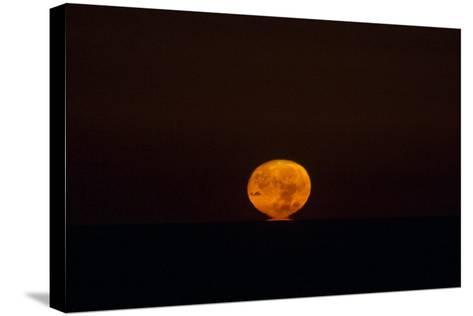 The Nearly Full Moon, Distorted by Atmospheric Refraction, Appearing to Sink into the Atlantic-Babak Tafreshi-Stretched Canvas Print