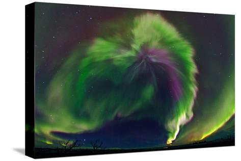 The Northrn Lights. Panoramic Projection of a Colorful Strong Aurora Outburst-Babak Tafreshi-Stretched Canvas Print