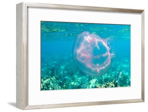 A Moon Jellyfish Floating Underwater by the Coral Reefs Offshore Key Largo, Florida-Mike Theiss-Framed Art Print