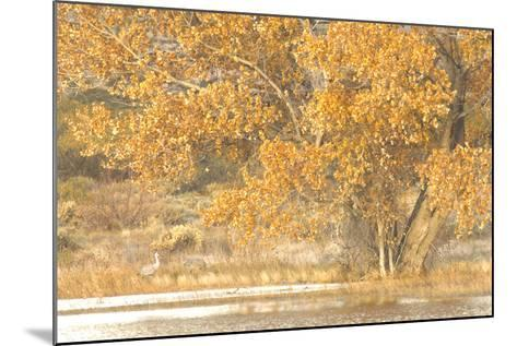 A Pair of Sandhill Cranes Walk under a Fall-Colored Tree on the Side of a Small Lake-Michael Forsberg-Mounted Photographic Print