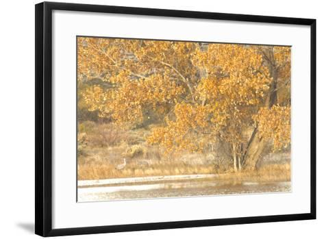A Pair of Sandhill Cranes Walk under a Fall-Colored Tree on the Side of a Small Lake-Michael Forsberg-Framed Art Print