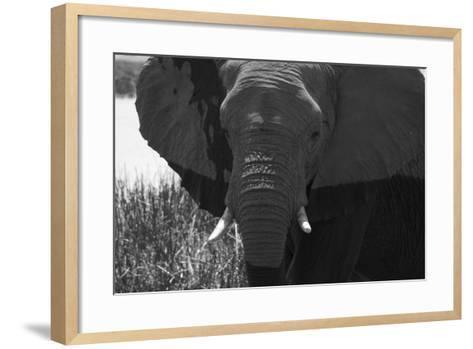 Close Up of an African Elephant's Face-Beverly Joubert-Framed Art Print