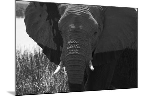 Close Up of an African Elephant's Face-Beverly Joubert-Mounted Photographic Print
