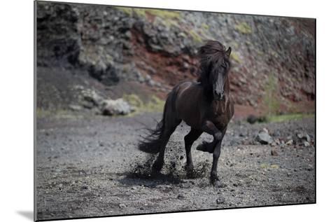 Icelandic Black Stallion, Iceland--Mounted Photographic Print