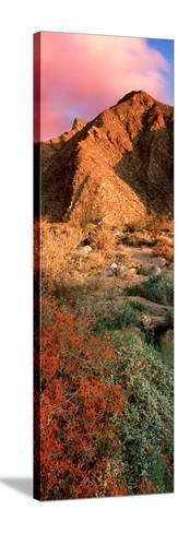 Plants on a Landscape, Anza Borrego Desert State Park, Borrego Springs, California, Usa--Stretched Canvas Print