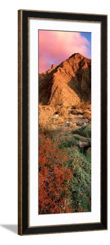 Plants on a Landscape, Anza Borrego Desert State Park, Borrego Springs, California, Usa--Framed Art Print