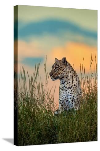 Leopard (Panthera Pardus), Serengeti National Park, Tanzania--Stretched Canvas Print
