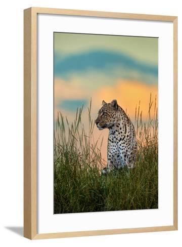 Leopard (Panthera Pardus), Serengeti National Park, Tanzania--Framed Art Print
