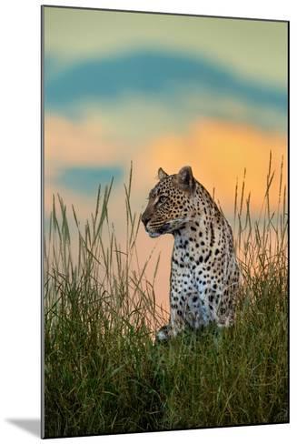 Leopard (Panthera Pardus), Serengeti National Park, Tanzania--Mounted Photographic Print