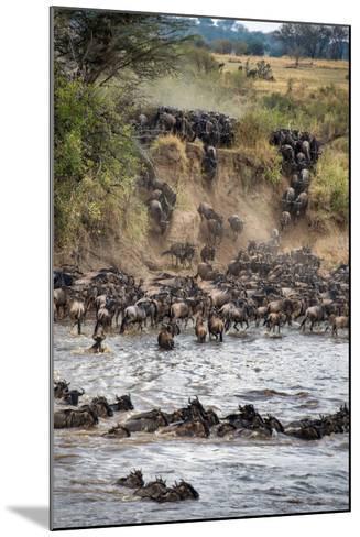 Wildebeests Crossing Mara River, Serengeti National Park, Tanzania--Mounted Photographic Print