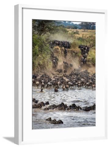 Wildebeests Crossing Mara River, Serengeti National Park, Tanzania--Framed Art Print