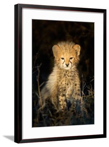 Cheetah (Acinonyx Jubatus) Cub in a Forest, Ndutu, Ngorongoro Conservation Area, Tanzania--Framed Art Print