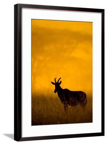 Topi (Damaliscus Lunatus) Standing in Forest, Serengeti National Park, Tanzania--Framed Art Print