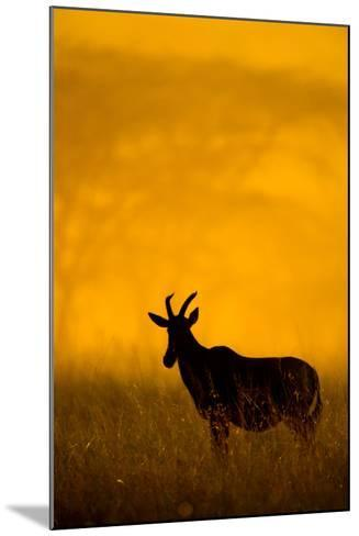 Topi (Damaliscus Lunatus) Standing in Forest, Serengeti National Park, Tanzania--Mounted Photographic Print
