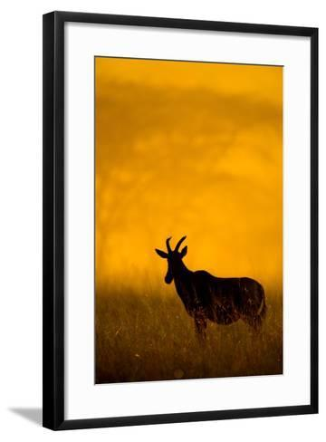 Topi (Damaliscus Lunatus) Standing in Forest, Serengeti National Park, Tanzania--Framed Art Print