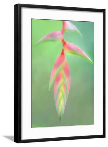 Heliconia Flower, Sarapiqui, Costa Rica--Framed Art Print