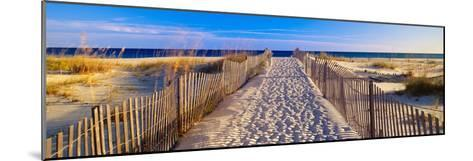 Pathway and Sea Oats on Beach at Santa Rosa Island Near Pensacola, Florida--Mounted Photographic Print