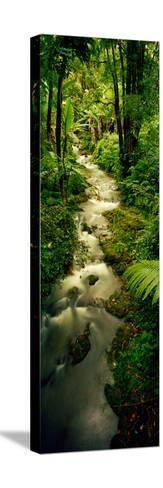 Creek Flowing Through a Rainforest, North of Hilo, Big Island, Hawaii, Usa--Stretched Canvas Print